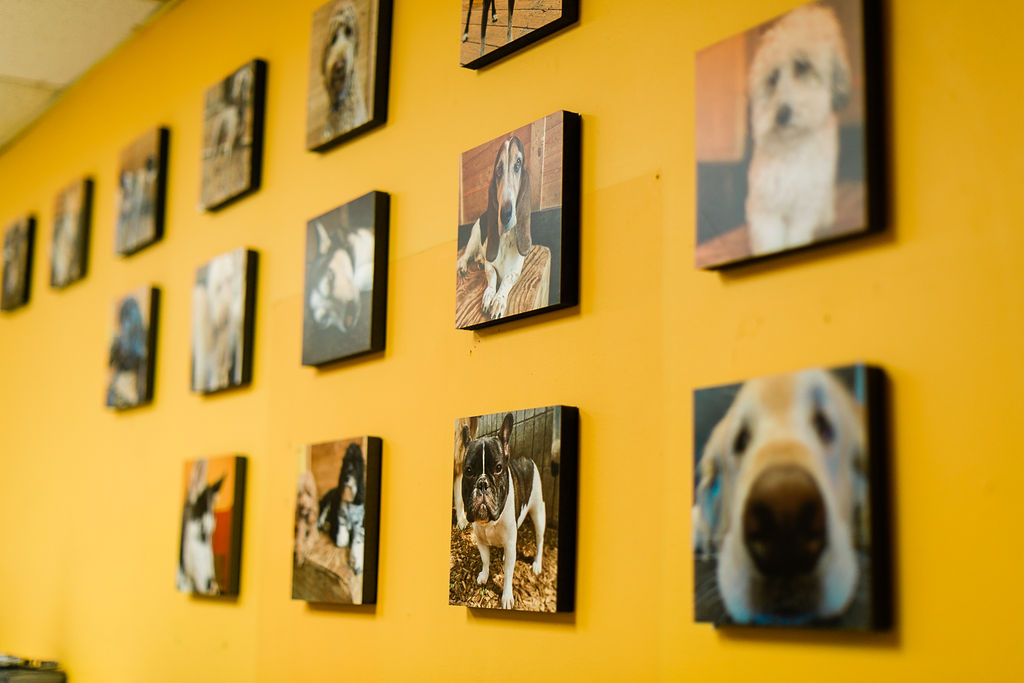 Photo Wall at Dog Buddies Daycare