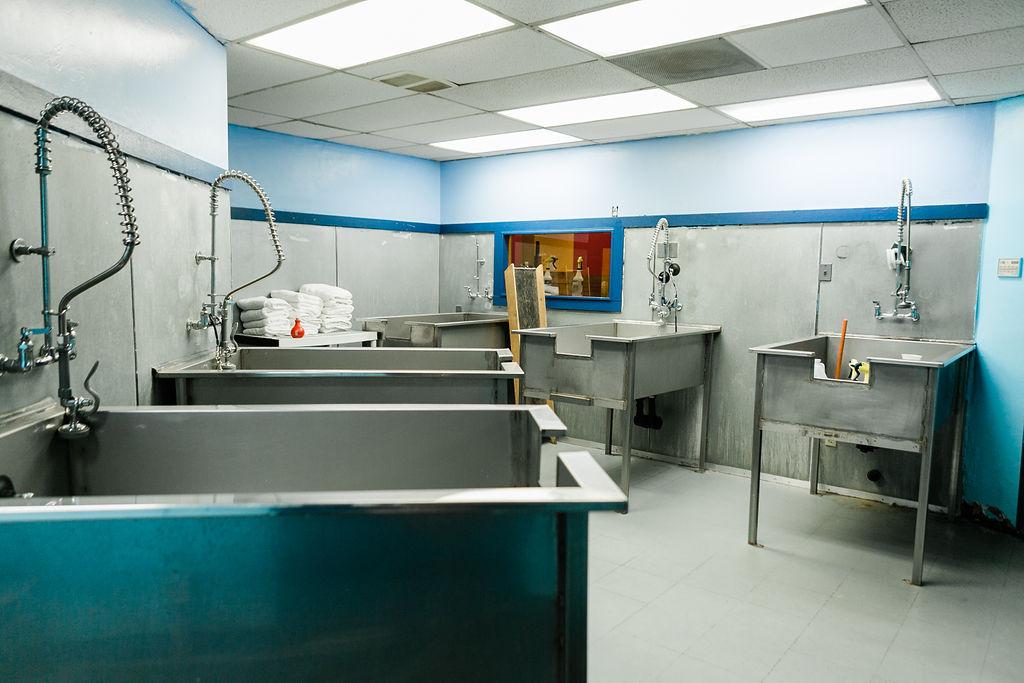 Washing Station at Dog Buddies Daycare